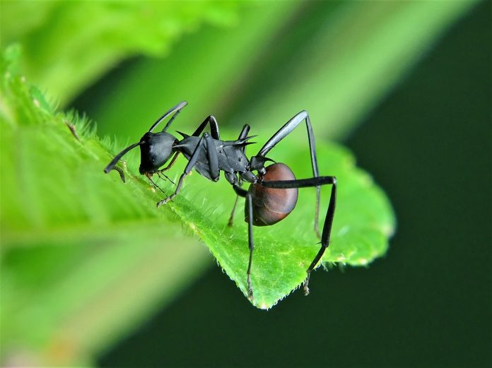 How to Get Rid of Carpenter Ants…for Good!
