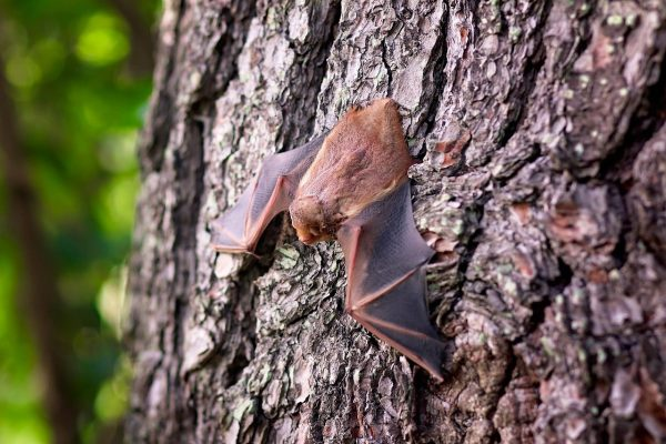 bat on trunk of the tree